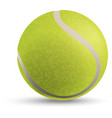 a tennis ball vector image