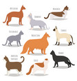 different cat breeds cute kitty pet cartoon cute vector image vector image