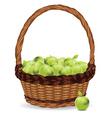 Basket of Green Apples2 vector image