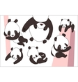 Cartoon panda bear set vector image