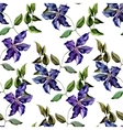 Clematis flower pattern vector image vector image