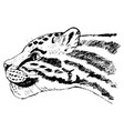 big cat from jungle vector image