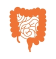 bowels organ human isolated icon vector image