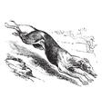 English Greyhound vintage engraving vector image