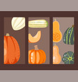 fresh orange pumpkin cards decorative seasonal vector image