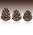 Set of pinecones in vector image