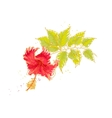 Hibiscus flower isolated on white background vector image