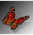 The Monarch butterfly vector image vector image