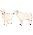 Sheep Character vector image