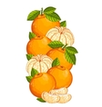 Mandarin isolated  composition vector image