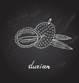 hand drawn durian vector image