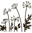 floral composition with dill plant vector image