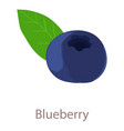 blue berry icon isometric 3d style vector image