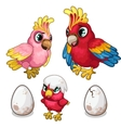 Parrots family and their nestling Tropical birds vector image