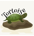 tortoise pet for home reptile animal vector image