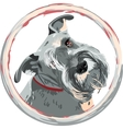 breed Miniature Schnauzer dog closeup vector image