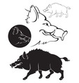 boar vector image vector image