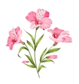 Alstromeria branch isolated on white vector image vector image