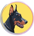 closeup serious dog Doberman Pinscher breed vector image vector image
