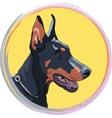 closeup serious dog Doberman Pinscher breed vector image