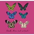 Collection with colorful butterfly vector image