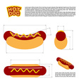 Hot dog infographics standard reference sizes of vector image