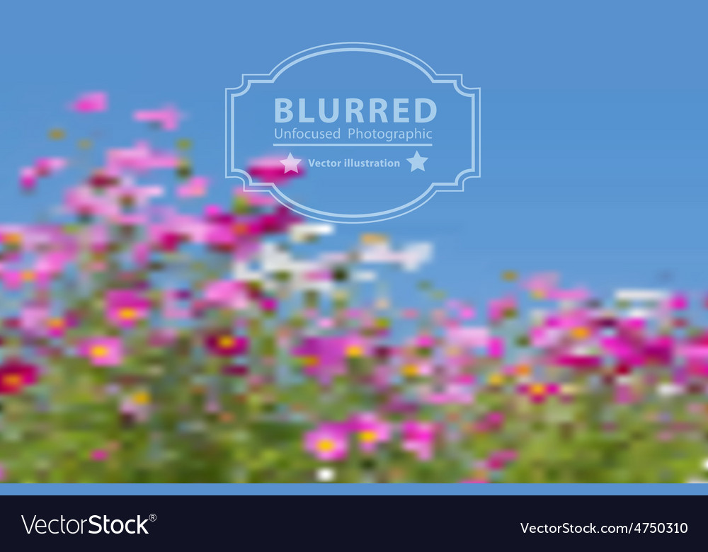 Blurred with cosmos flowers vector