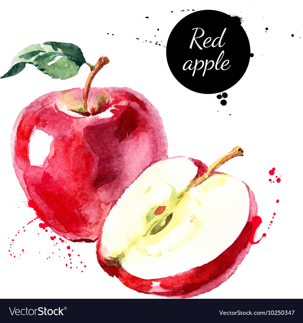 Watercolor hand drawn red apple isolated eco vector