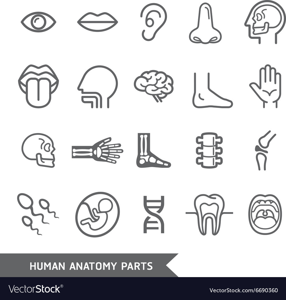 Human anatomy body parts detailed icons set vector