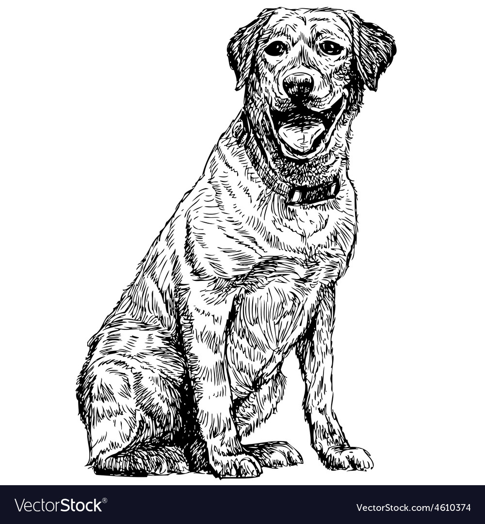 Labrador retriever 07 vector