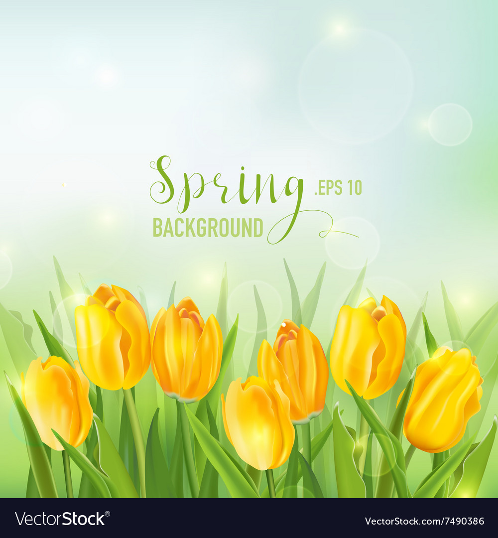 Spring background  with yellow tulips flowers vector