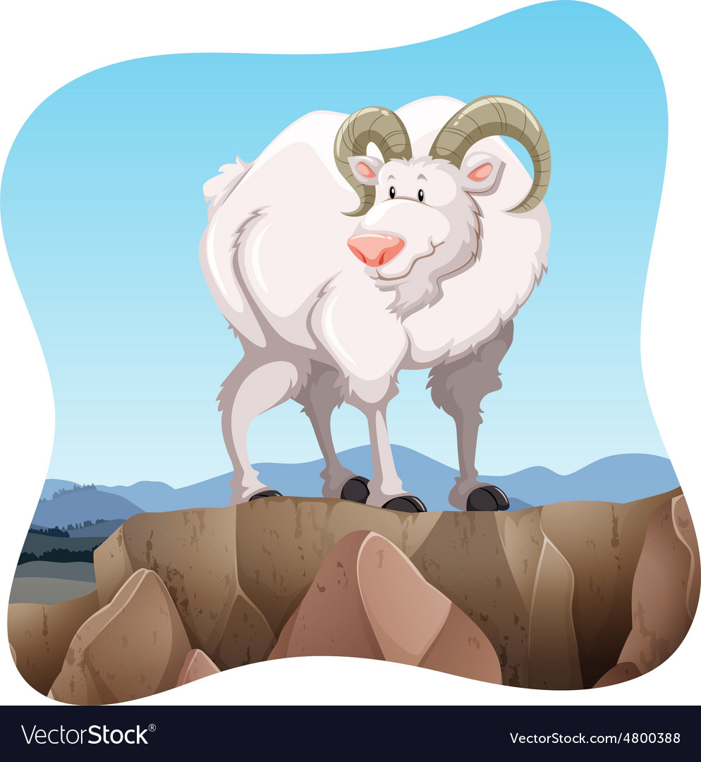 White goat vector