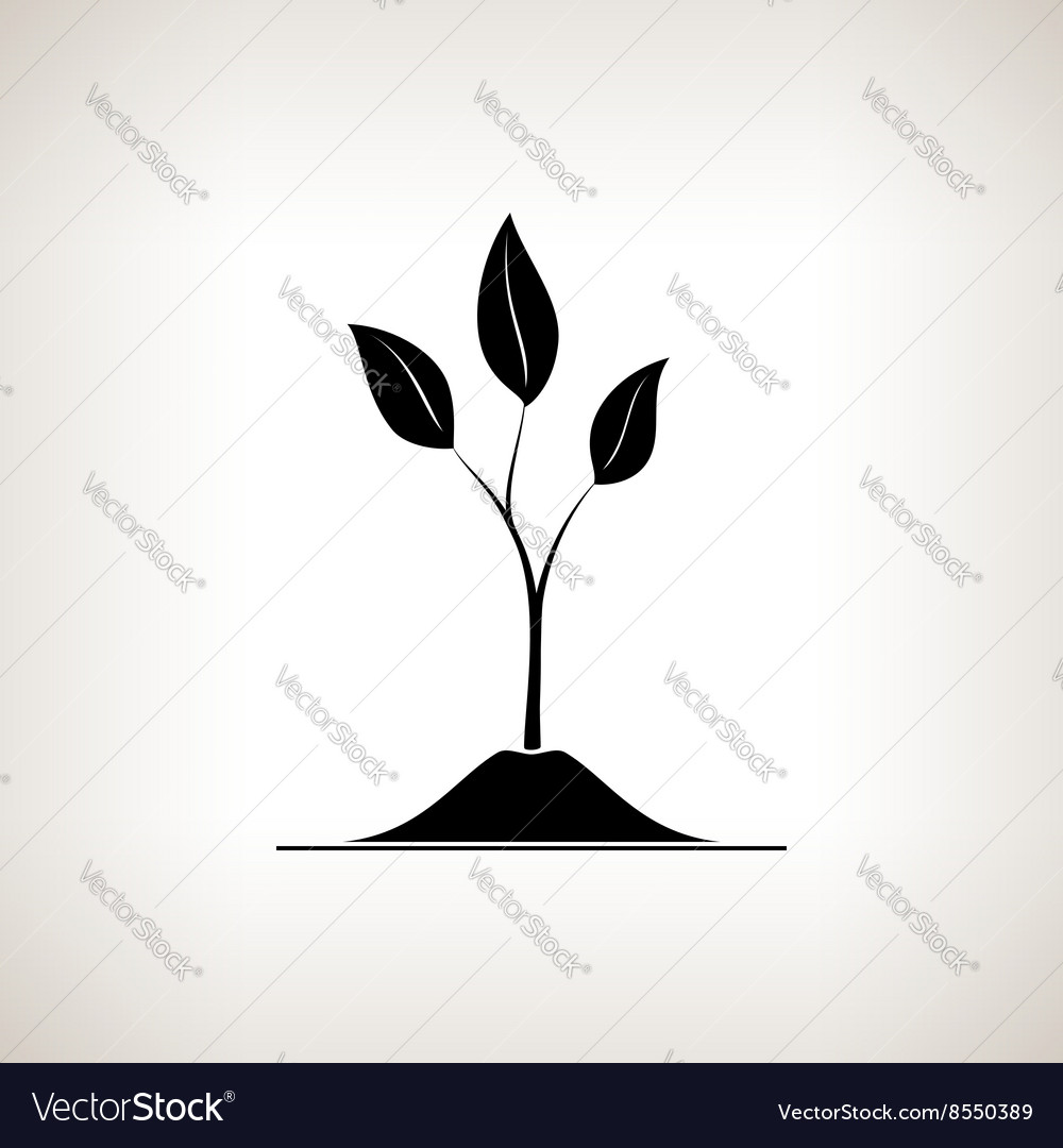Sprout shoot on a light background vector