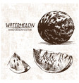 digital detailed watermelon hand drawn vector image