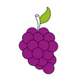 delicious grapes fruit vector image