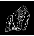 Hand-drawn pencil graphics monkey gorilla vector image