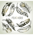 Feather sketch set Hand drawn vector image