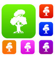 oak set collection vector image