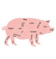pork chart vector image