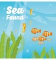 Sea fauna cartoon vector image