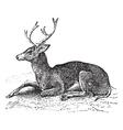 Mule deer vintage engraving vector image