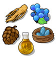 plants and eggs in nest food and animal concept vector image