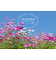 blurred with cosmos flowers vector image