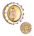 Structure of the AIDS virus vector image