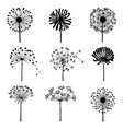 set of doodle dandelions decorative elements for vector image