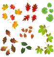 Autumn leaf collection for designers vector image