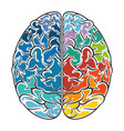 human brain intelligence vector image