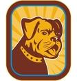 Bulldog and Boston Terrier hybrid vector image