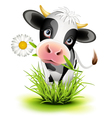 little holstein cow vector image