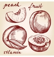 fruit peach set hand drawn llustration vector image